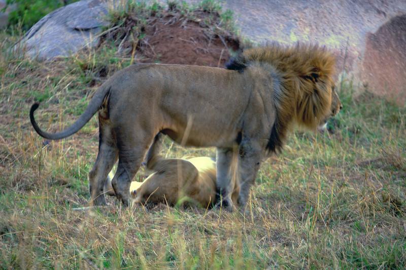 E15 Lions in the Rocks