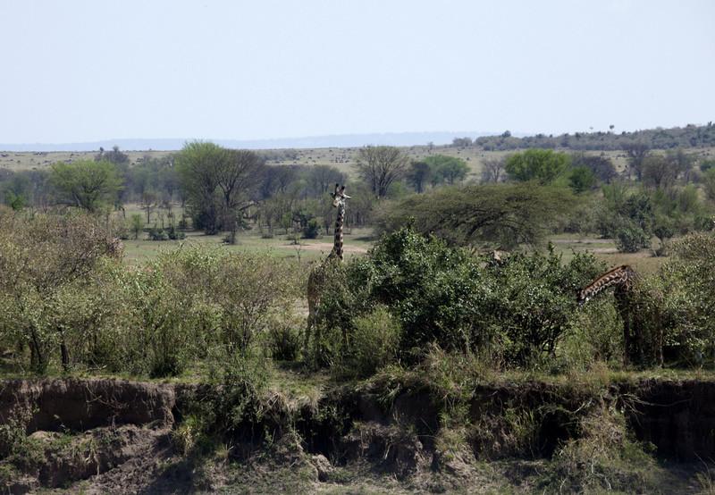 A24 - Landed in Serengeti Nat Pk - Kogakuria - Edge of Airstrip tif