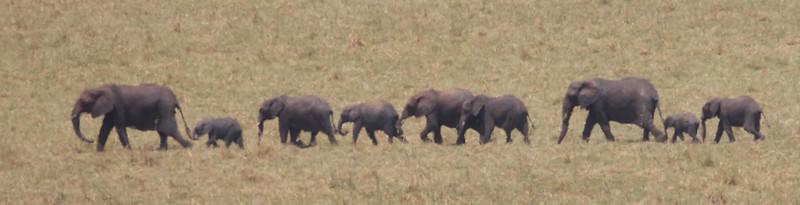 Elephants at Water Spot