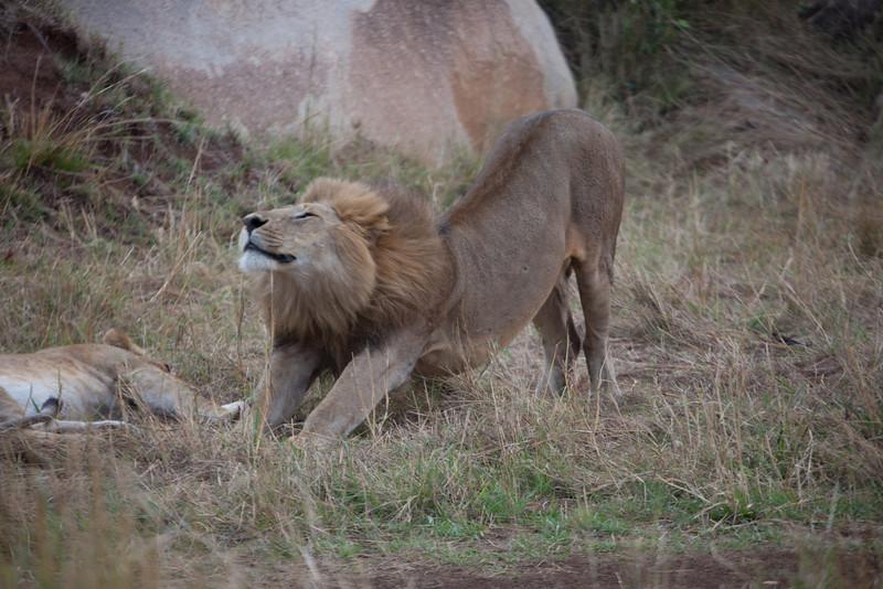 E12 Lions in the Rocks