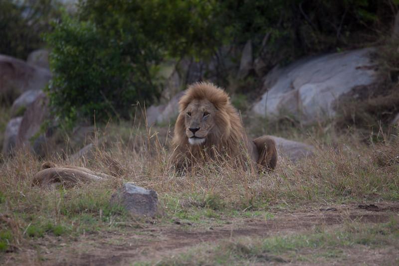 E11 Lions in the Rocks