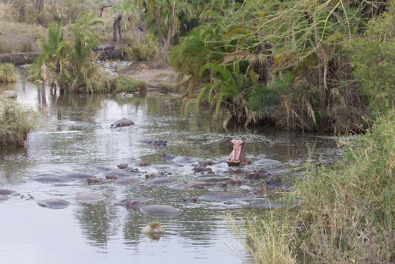 Scenic Serengeti