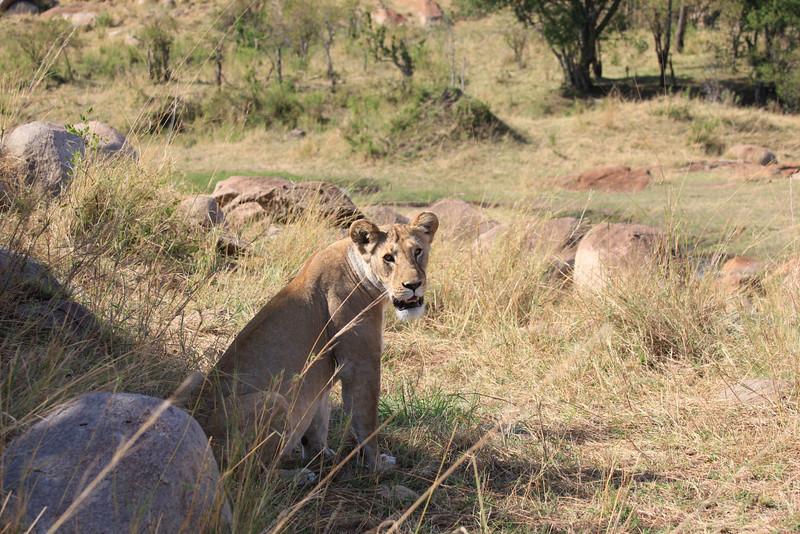 E06 Lions in the Rocks