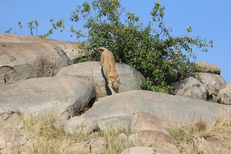 E03 Lions in the Rocks