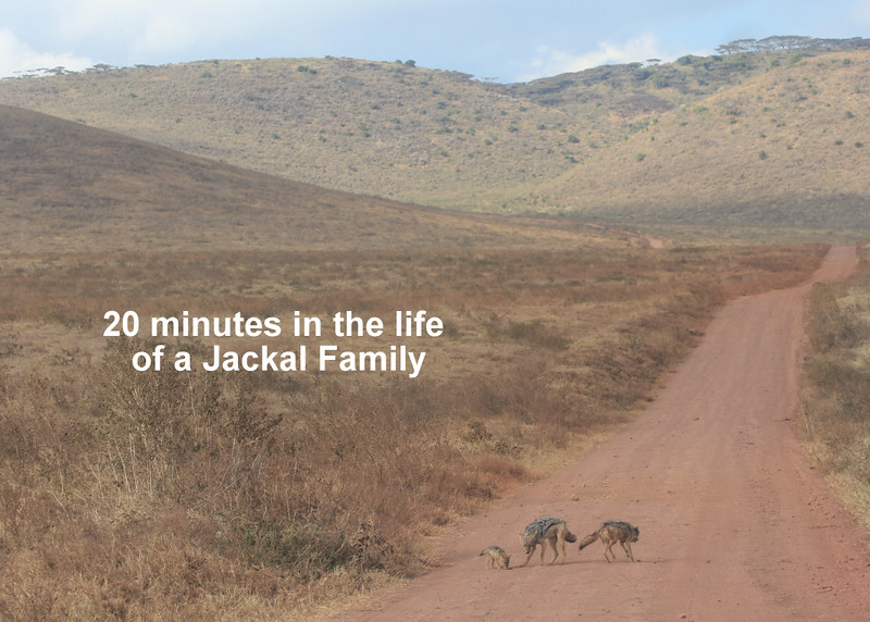 Jackel and Hyaena Story