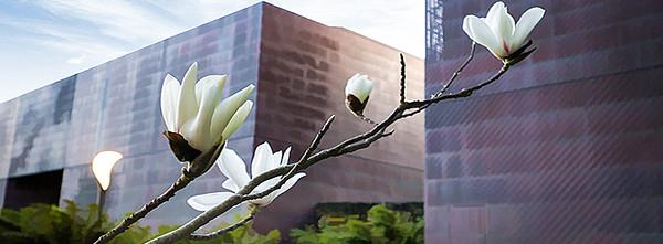 blossom timeline