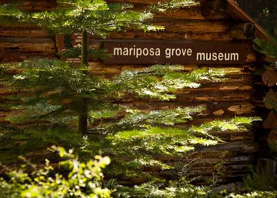 Mariposa Grove of Giant Sequoias 2011