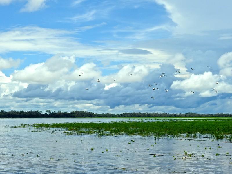 January Lake, Amazon River, Brazil