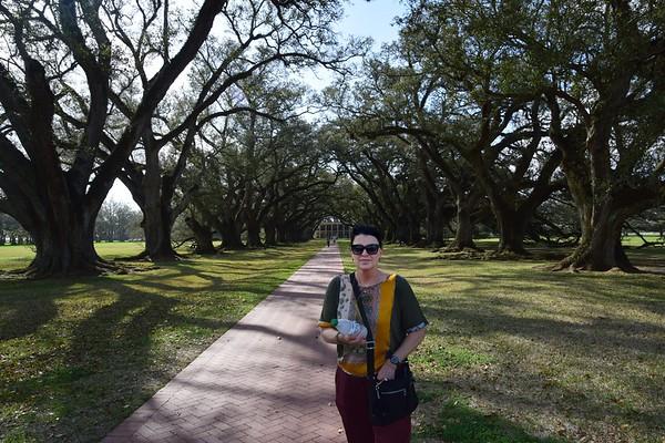 Oak Alley along the Mississippi River in Louisiana