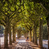 UNDER THE TREES - FRANKFURT