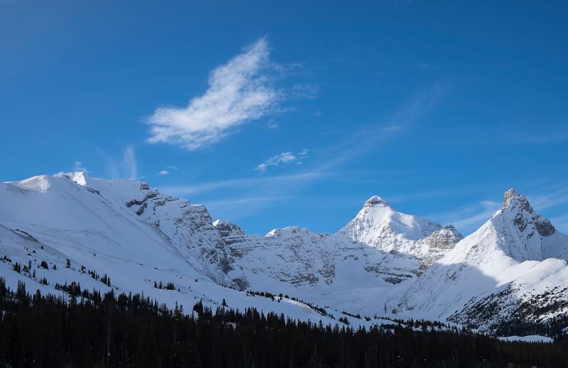 Jasper in January Beauty