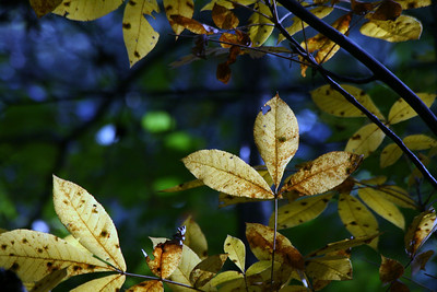 This is one of my all time favorites -- Just love the bokeh and the complementary colors