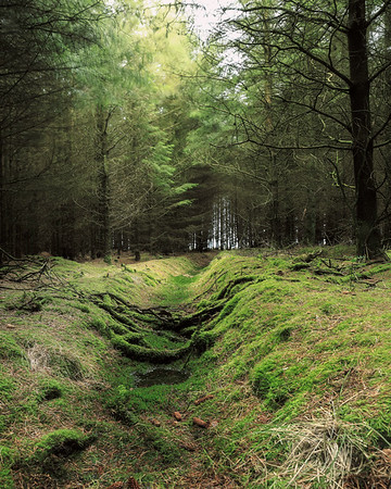 MOSSY DITCH MICKLEBY WOODS