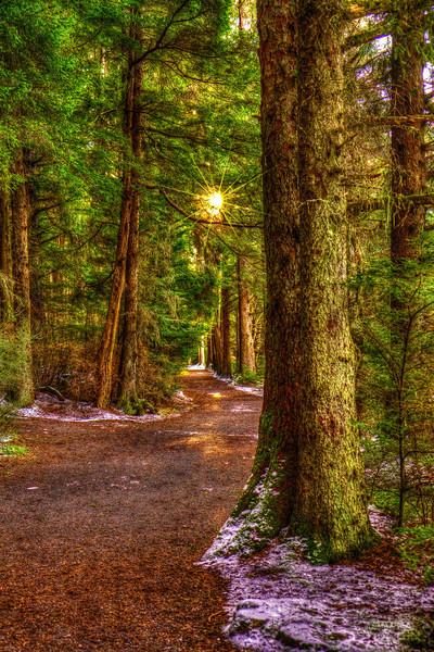 Morning Path12-4-12
