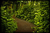 Forest Path 6-19-11