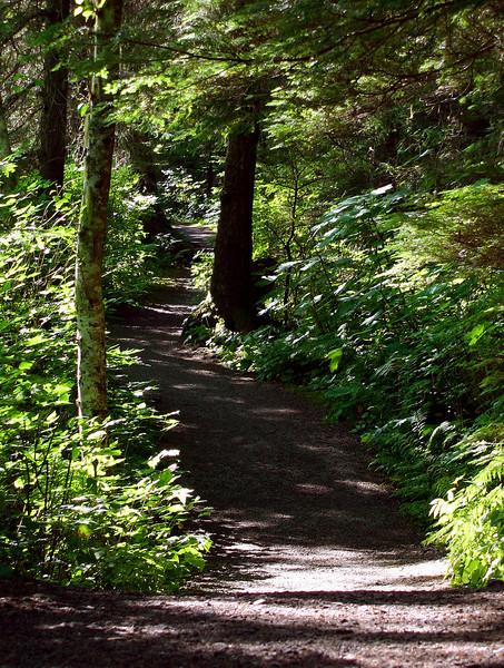 Woodland-Path