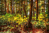 Autumn Forest10-1-11