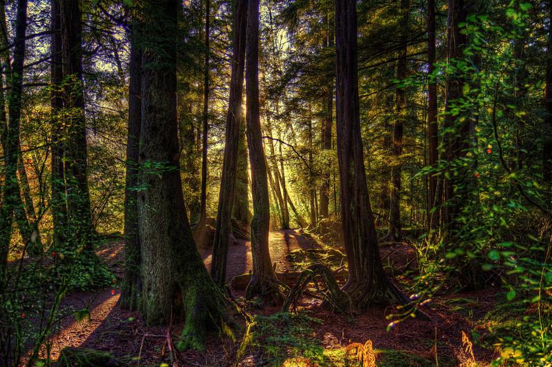 Sunshine in Trees11-2-13