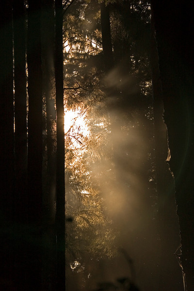 Morning Rays3