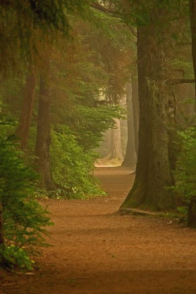 Foggy Walk