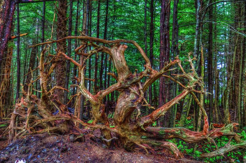 Tree Roots 5-27-12