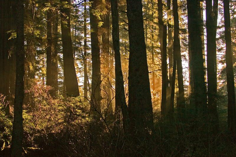 Sun on Trees1