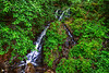 Thimbleberry Creek 8-2-11