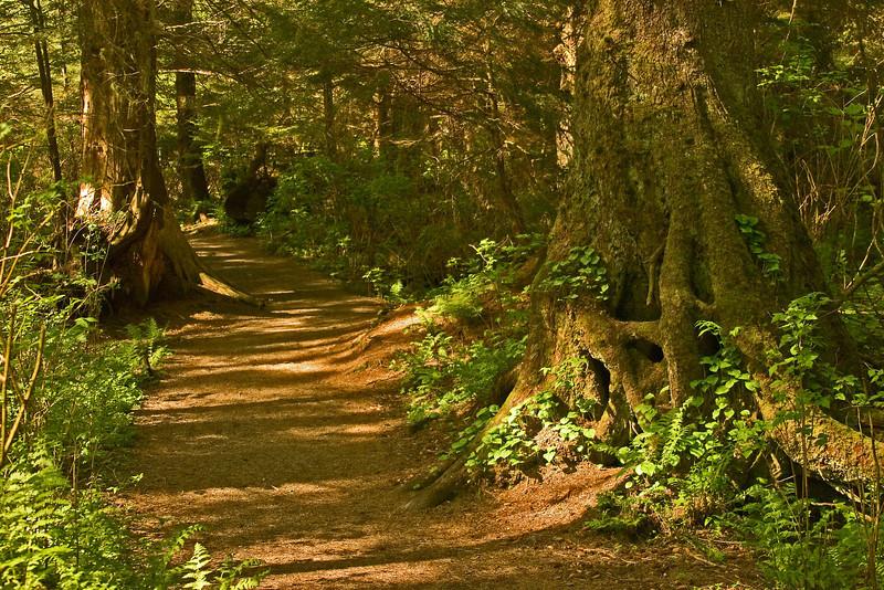 Shadowy Path2