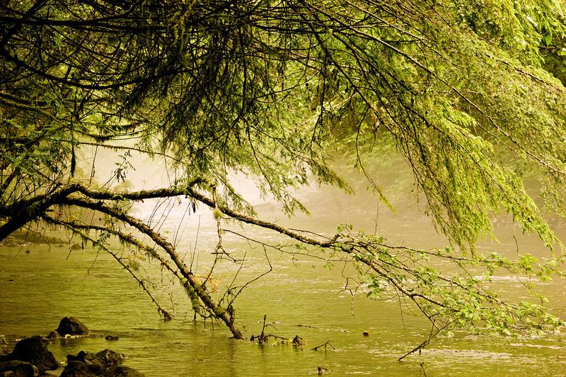 Foggy River3