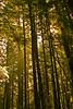 Sun&Trees1