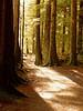 Sun-on-Path2