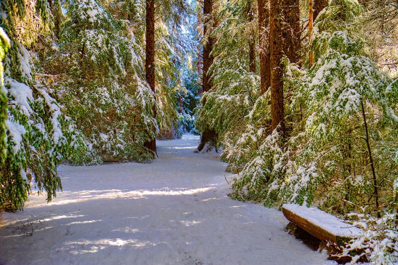 Snowy Path 3-19-12