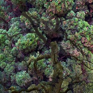 tree fantasy (I)