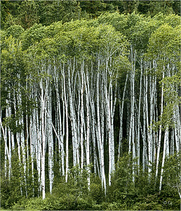 """Print title:  """"  ASPEN COUNTRY  """""""