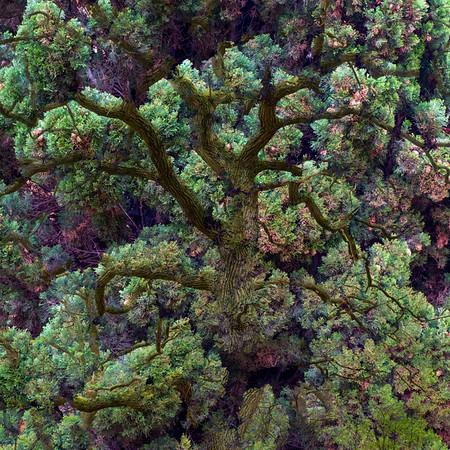 tree fantasy (II)