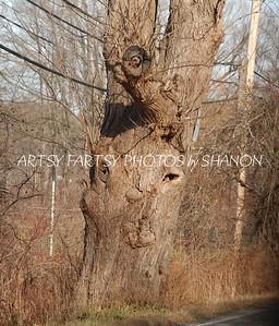 tree face (1)