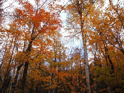 The three weeks of technicolor in the fall is by far the prettiest time of the year in NY.