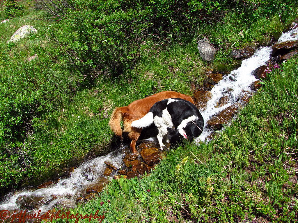 The dogs enjoyed all the little side creeks.