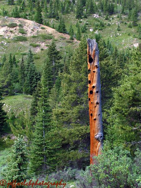 A cool dead tree turned birdhouse.