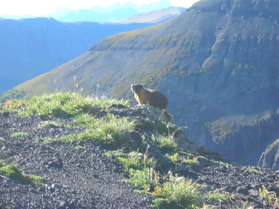 A marmot, which I completely missed.