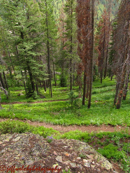 This is what the last 3 miles of trail looks like as you climb out of the Buchanan Creek valley up to Gourd Lake.  Switchback after switchback!