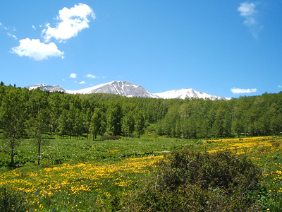There were great views of Mt. Sopris along this section of the trail.