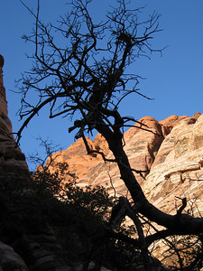 Silhouetted tree in Calico Hills.
