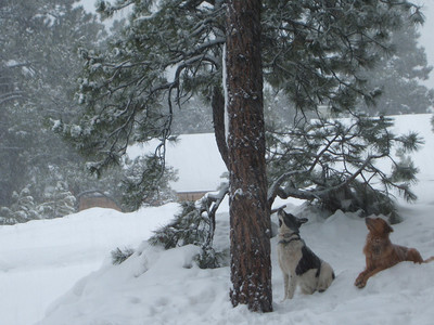 It may be a blizzard out, but the dogs are still more concerned about the squirrel up in the tree.