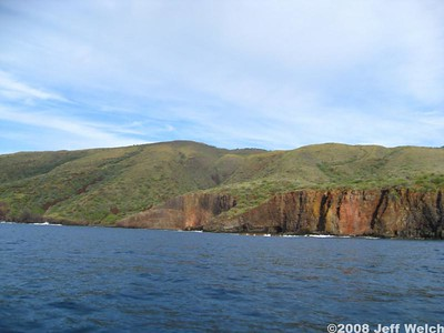The pali (sea cliffs) of Lana'i.