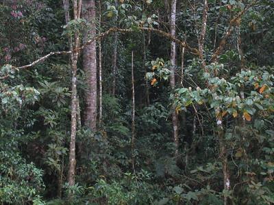 At Savegre Mountain Lodge, Costa Rica, 1-30-09