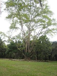 Near Lookout Inn, Carate, Costa Rica