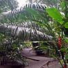 Between Rooms at Cariblue Beach & Jungle Resort