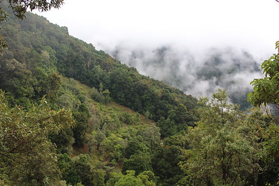 Mariam's Quetzales Cabinas, San Gerardo de Dota, Costa Rica