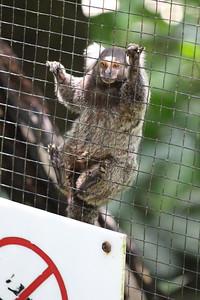 AnimalRescate ZooAve, La Garita, Costa Rica